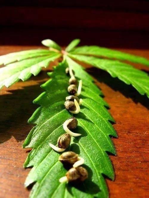 Artículo que nos recomienda como realizar la germinación de las semillas. Unos métodos fáciles, sencillos y eficaces.